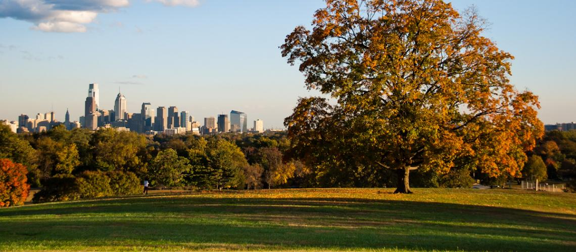 Tree on grassy hill with city skyline in background